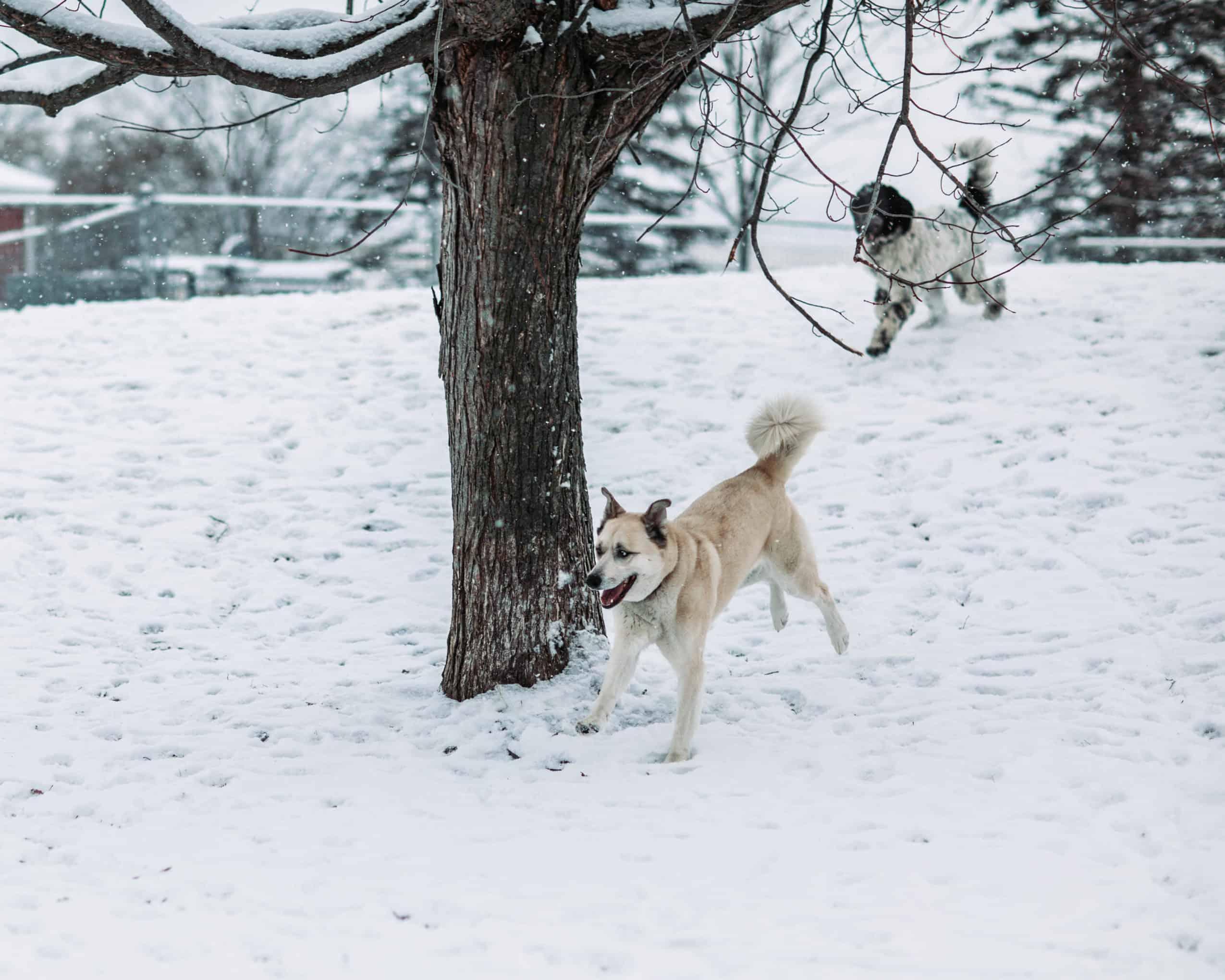 centre laka pension pour chien (1)