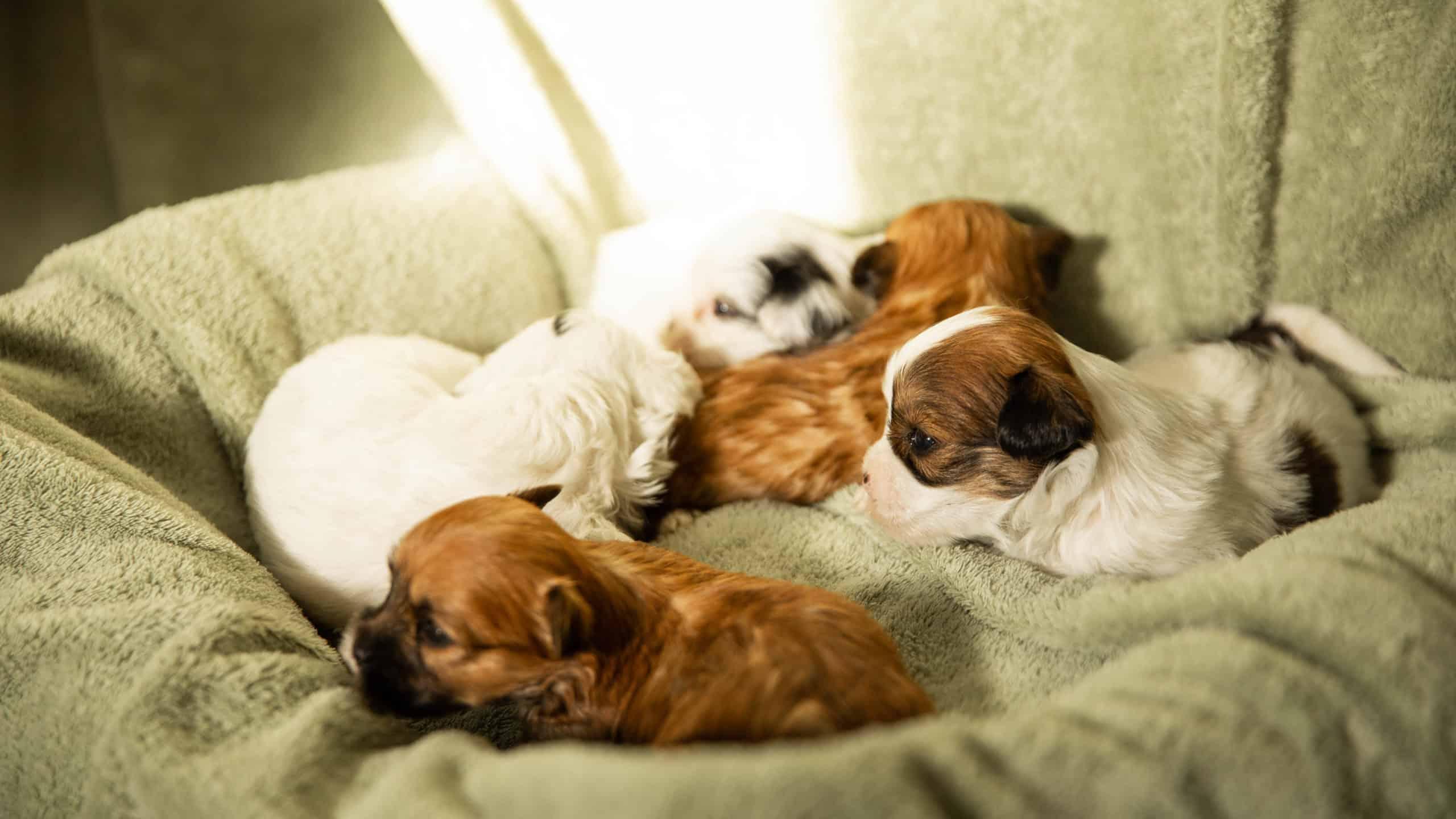 centre laka pension pour chien (11)