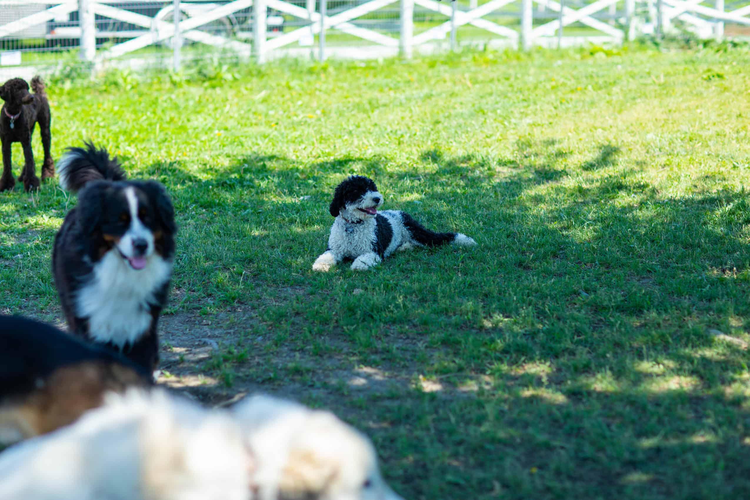 centre laka pension pour chien (12)