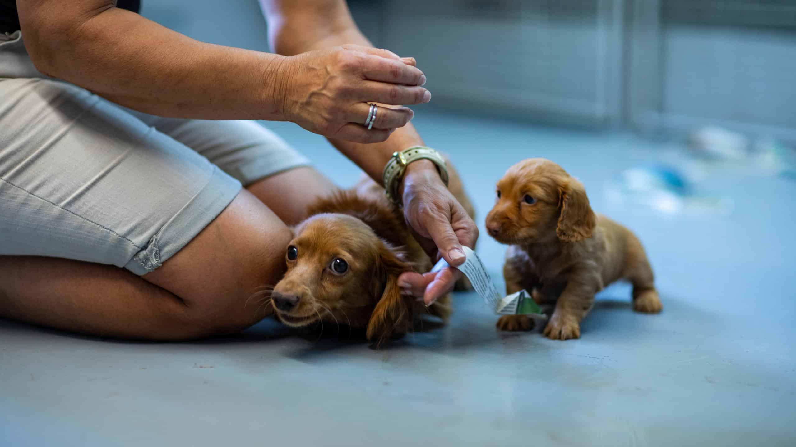 centre laka pension pour chien (13)