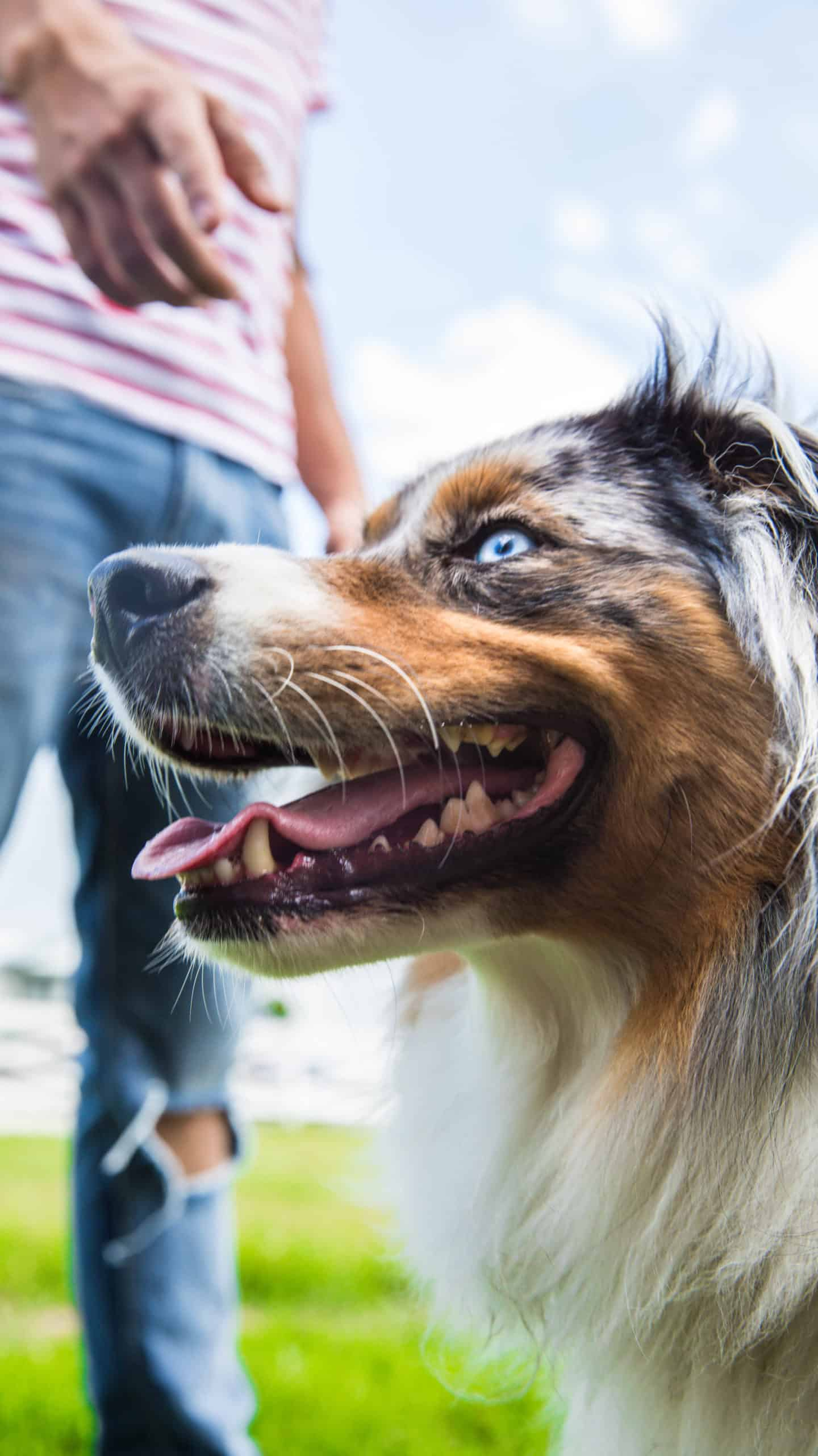 centre laka pension pour chien (14)