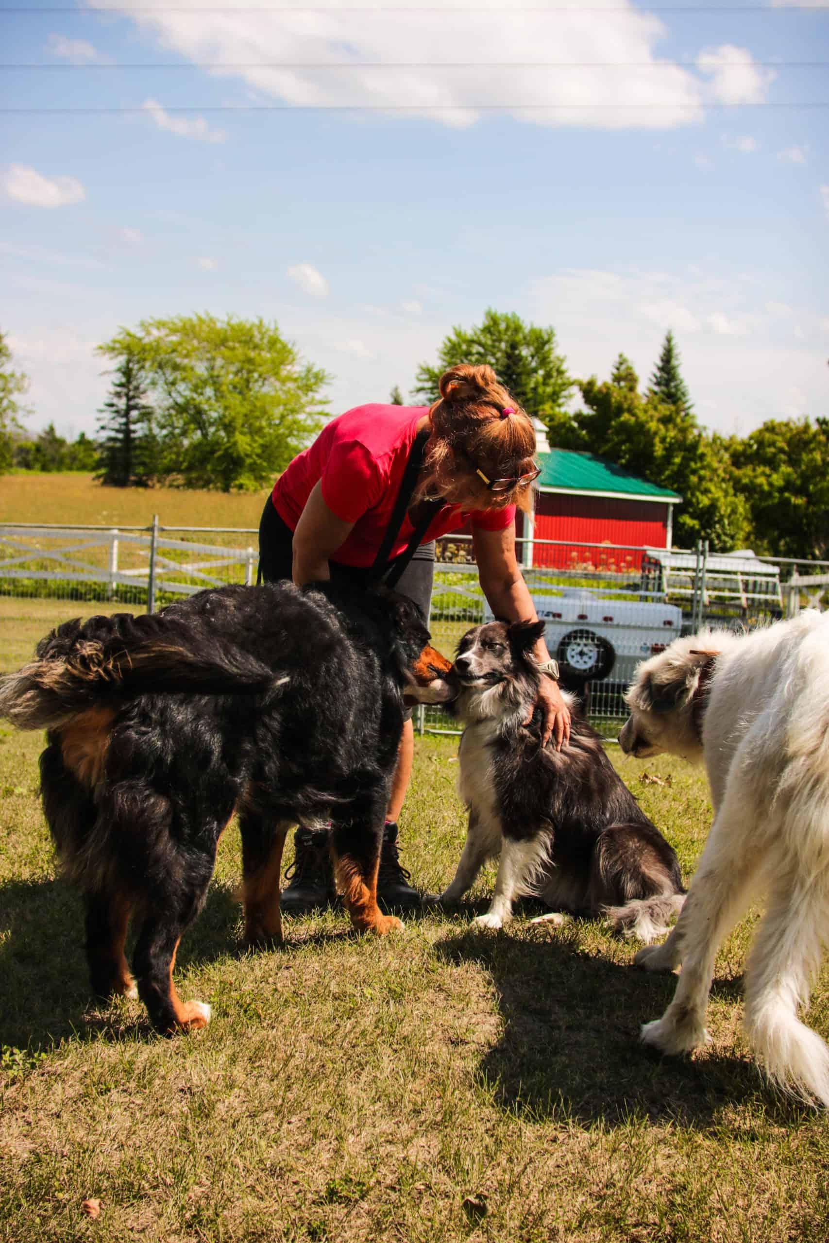centre laka pension pour chien (18)