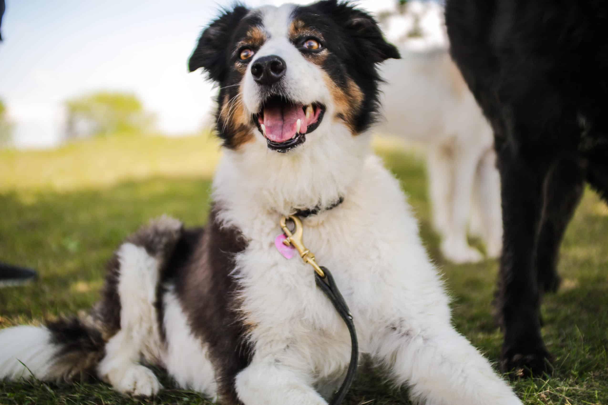 centre laka pension pour chien (19)