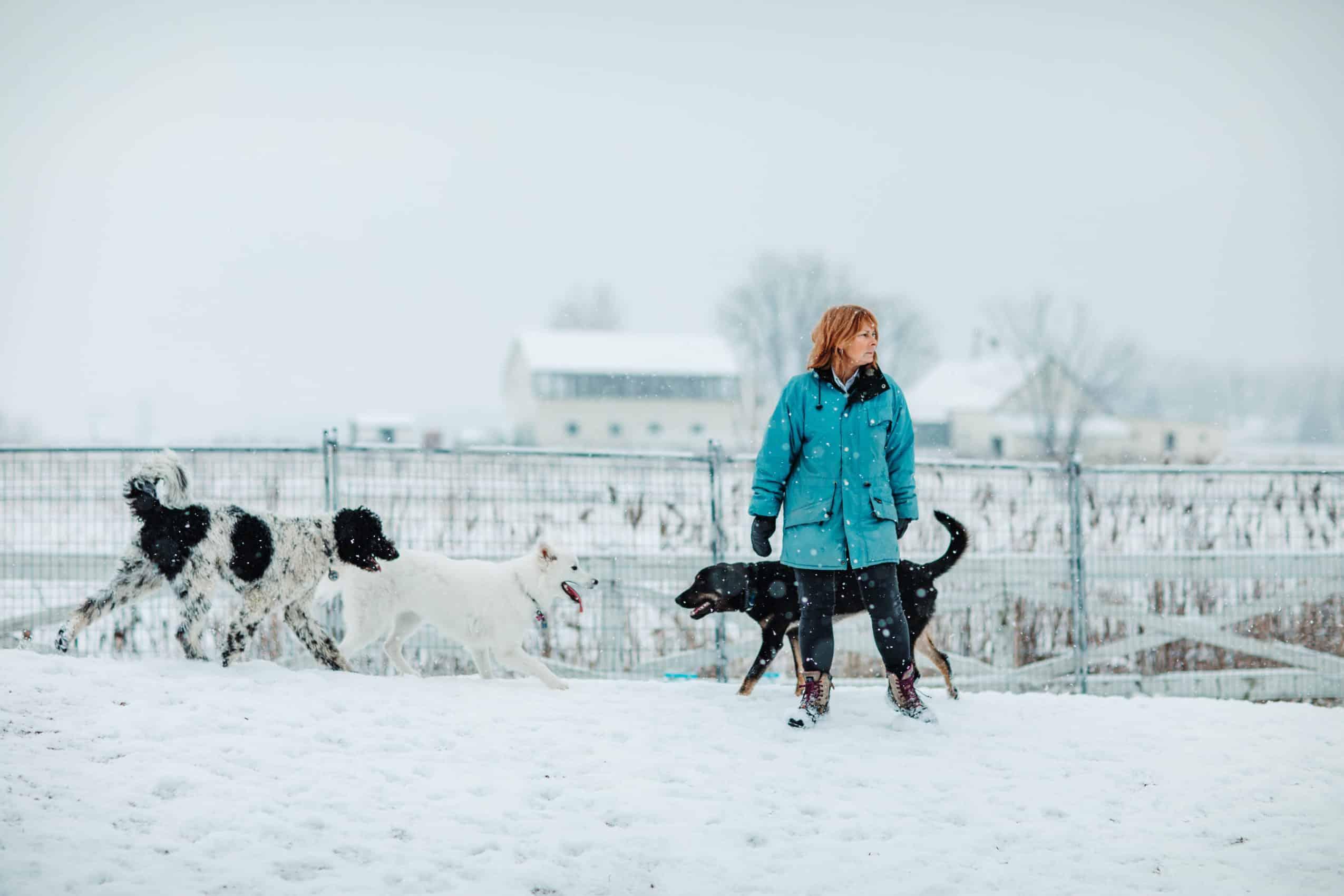 centre laka pension pour chien (2)