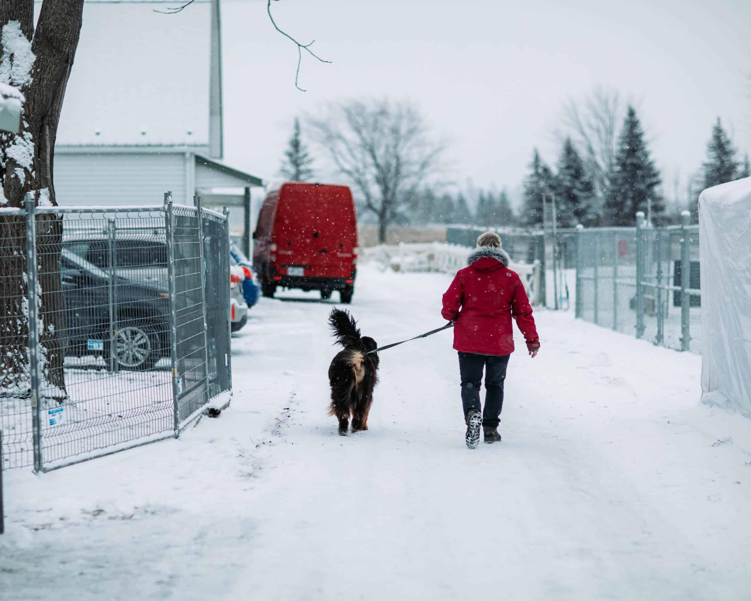 centre laka pension pour chien (20)