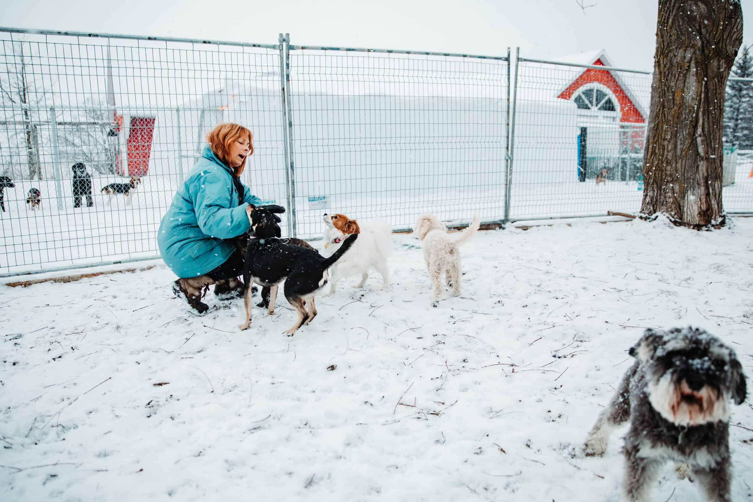 centre laka pension pour chien (3)
