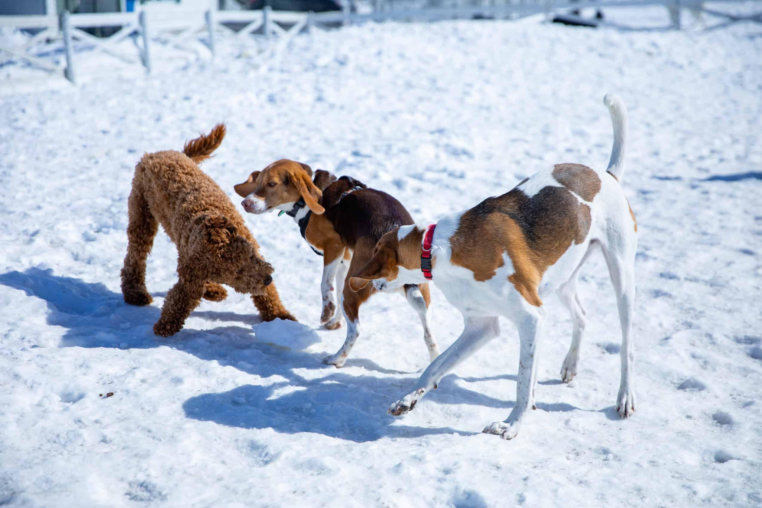 centre laka pension pour chien (6)